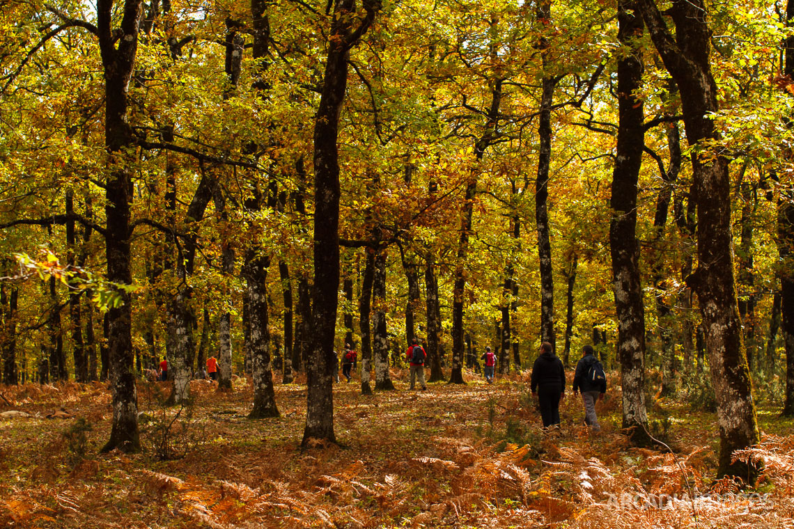 Foloi oak forest, named by Hercules in memory of his deceased friend, centaur Folos. Eleia, Peloponnese, Greece