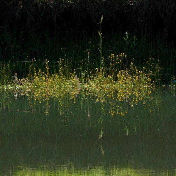 Ladon river near Pournaria village. Arcadia, Peloponnese, Greece